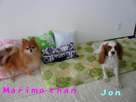 marimo & jon.JPG