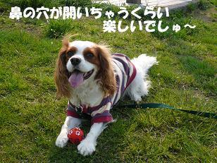 多摩川4.JPG