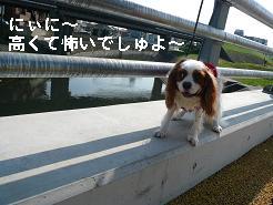 橋4.JPG